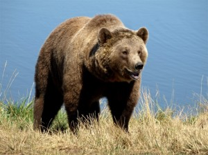scandinavian_wildlife_park_26-26995-1024x767[1]