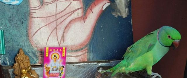 bird-fortune-teller-klang[1].JPG
