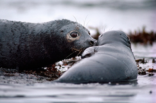 arctic-exxon-seal_natgeo-1066[1]