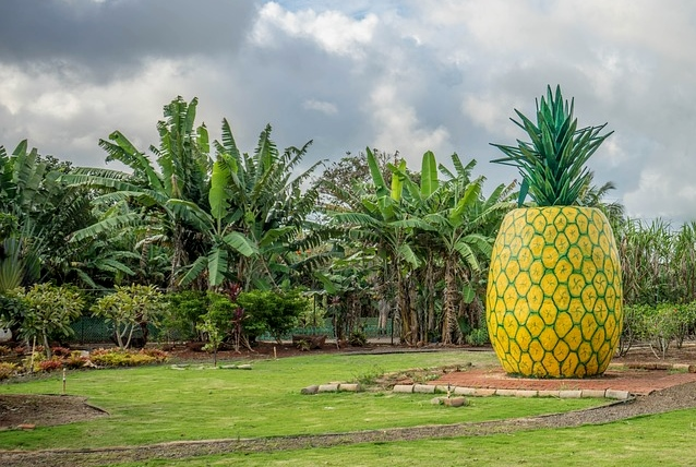 pineapple-decoration-1037911_960_720[1]