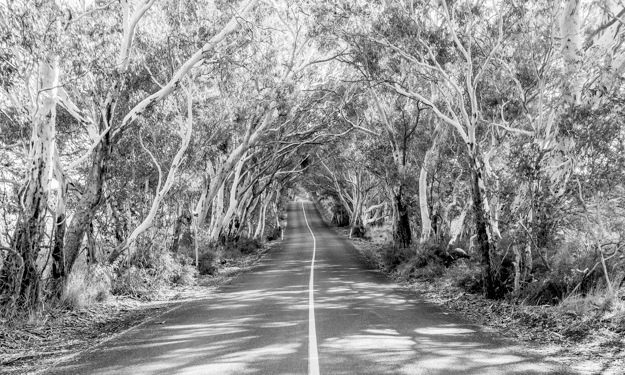 Jacobs-Creek-Barossa-Valley-South-Australia-228[1]