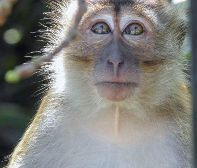 monkeys-at-botanic-gardens[1]