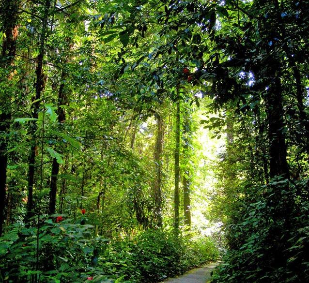 penang-botanic-garden2[1]