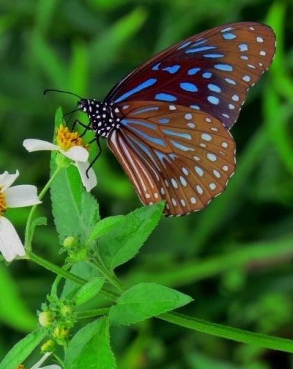 butterfly-e1455137715266[1]